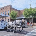 white horse with carriage on street during daytime